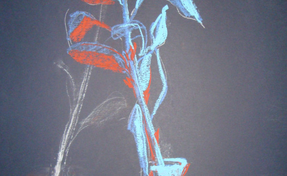 trandafir--desen-web-
